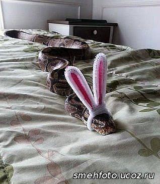 В костюме кролика на кроватм