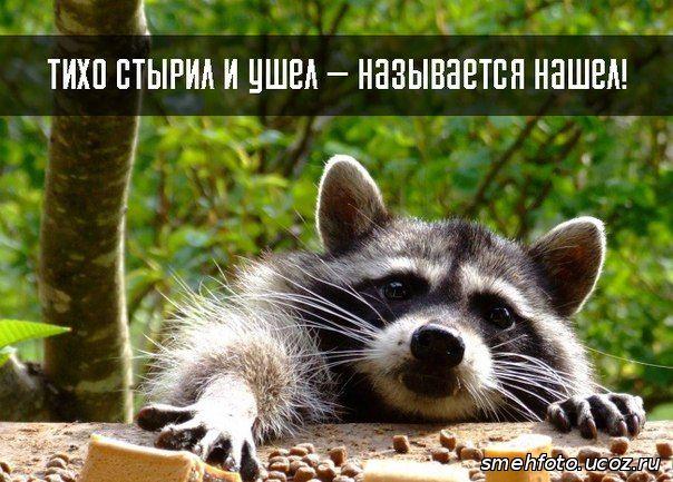 http://smehfoto.ucoz.ru/_ph/10/311392840.jpg