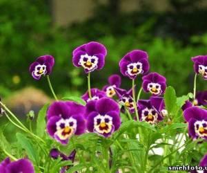 Цветочки улыбашки